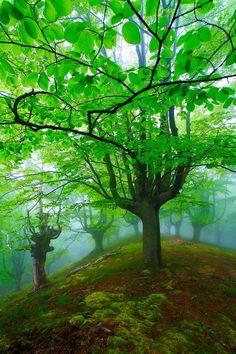 Woods - Costa Quebrada, Spain