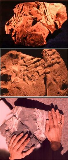 Dr. Jamie Gutierrez from Columbia discovered the fossilized bones of two human hands imbedded in Cretaceous rock. Near the discovery site of the fossilized hands are the fossilized bones of a large Ichthyosaurus marine dinosaur, giving the assignment of late Cretaceous period (on the evolutionary scale) to the rock.