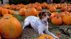 19 Insanely Adorable Photos of Puppies and Pumpkins: Extreme cuteness alert!