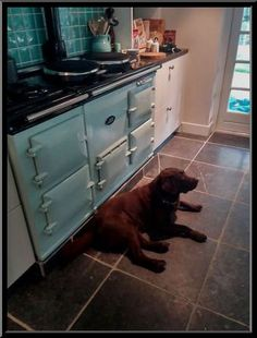 www.agakookhuisjantrus.nl Ook de doggies van Karen en Julian Griffiths LOVES the AGA.