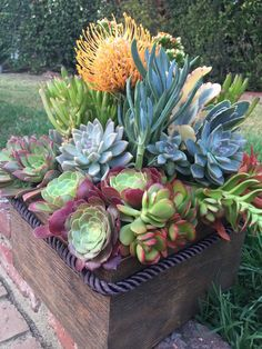 Nice succulent arrangement by Ana Calderon Nice succulent arrangement by Ana Calderon Growing Succulents, Succulents In Containers, Container Plants, Cacti And Succulents, Planting Succulents, Container Gardening, Planting Flowers, Succulent Gardening, Garden Pots