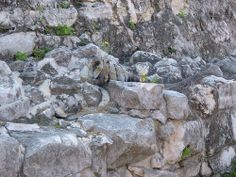 Google Image Result for http://conservationreport.files.wordpress.com/2009/01/camouflaged-iguana.jpg