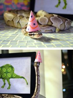 What do you think of serpent-cosplay? You might be afraid of snakes, but a snake in a hat looks harmless, doesn't it? Besides, such lovely costumes remind you that it's time to party! Pretty Snakes, Cool Snakes, Beautiful Snakes, Python Royal, Cute Reptiles, Reptiles And Amphibians, Mammals, Snakes With Hats, Serpent Animal