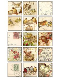 2 inch squares Digital Collage Sheet birds images by 300dpi