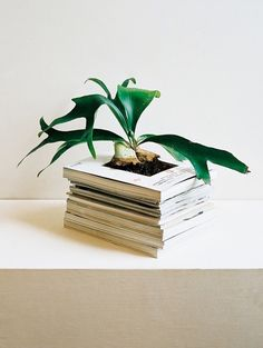 An alternative plant holder