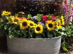A bucket load of sun