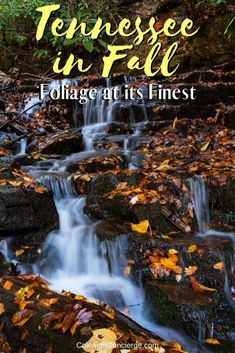 Tennesee is not only one of the best places to see fall colors; it is also one of the best places to visit in October in the US! Click for tips on finding fall fun and foliage in Tennessee! #FallTravel #Tennessee #FallFoliage #TravelTips #fall Usa Travel Guide, Travel Usa, Travel Tips, Travel Ideas, Solo Travel, Time Travel, Cool Places To Visit, Places To Travel, North America
