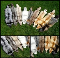Any Taxidermy Mount Whether Hard Foam Mout Or Soft Poseable Using Whole Partial Skins Hides Pelts Fur