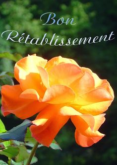 Image Bon Courage, Nirvana, Soigne Toi Bien, Get Well Soon, Messages, Recovery, Sciatica, Celebrations, Roses