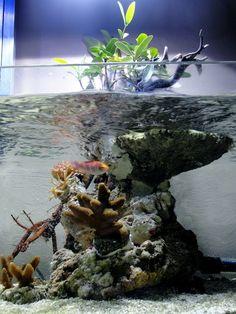 mangroven-pflanzen im salzwasser-aquarium mangrove island mas aquarium mangrove tree… Saltwater Fish Tanks, Saltwater Aquarium, Freshwater Aquarium, Marine Tank, Marine Fish, Marine Aquarium, Reef Aquarium, Tropical Fish Store, Nano Reef Tank