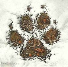 Posts about Bev Doolittle written by Bev Doolittle, How To Dry Basil, Animal Pictures, Canvas Art, Mint, Herbs, Ebay, Creatures, Posts