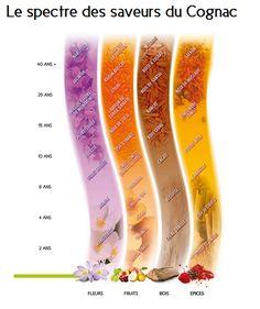 Cognac, une passion: Arômes et saveurs du cognac, sa dégustation