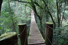 El Salvador rainforest