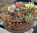 Robertas Coco Fibre Cut & Plant Succulent Living Quilt — QVC.com