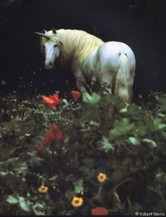 Robert Vavra, acclaimed photographer and author. I love his work with horses!