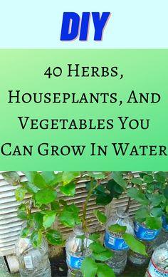 Indoor Vegetable Gardening, Home Vegetable Garden, Indoor Garden, Garden Plants, Container Gardening, Indoor Plants, Herb Garden, Gardening Tips, Inside Plants