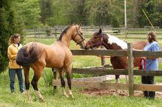 Keeping a stallion