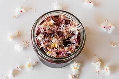 kwiat kasztanowca Acai Bowl, Panna Cotta, Oatmeal, Breakfast, Ethnic Recipes, Food, Acai Berry Bowl, The Oatmeal, Morning Coffee