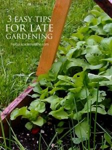 Vegetables and Herbs You Can Still Plant To Start A Late Garden | Homesteading | Gardening