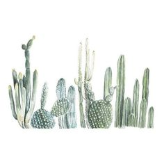 cactus watercolor ❤ liked on Polyvore featuring home, home decor, cactus home decor and fox home decor