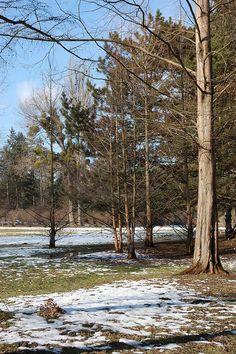 winter in Dendrarium park, Chisinau, Moldova