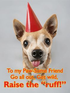 Send Free Party Animal Funny Birthday Card for Friends to Loved Ones on Birthday & Greeting Cards by Davia. It's free, and you also can use your own customized birthday calendar and birthday reminders. Birthday Wishes Funny, Birthday Cards For Friends, Birthday Greeting Cards, Friend Birthday, Birthday Greetings, Crazy Birthday, Birthday Stuff, Funny Animal Pictures, Funny Animals