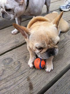 BEST toy for dogs! Ours have 2 of these balls and they are indestructible!!