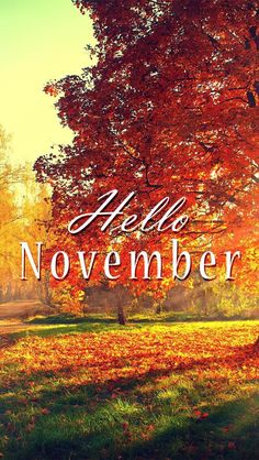 Wallpaper iPhone/hello November/fall ⚪️