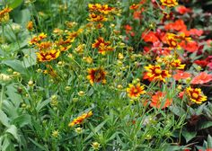 When the weather is hot, it's not too late to plant blooms. Marigolds are a great choice. Check out our tips to successful gardening in the heat.