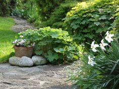 Landscaping With Rocks, Landscaping Ideas, Landscape, Garden, Google, Plants, Diy Landscaping Ideas, Scenery, Garten