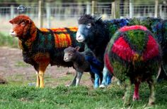 Plaid Sheep - Awesome!