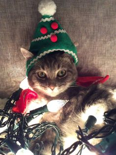 ~ kitty in a christmas tree hat Christmas Kitten, Christmas Animals, Christmas Tree, Cat Dressed Up, Winter Cat, Mundo Animal, Tier Fotos, Cat Costumes, Christmas Costumes