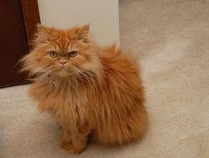 surly cat.