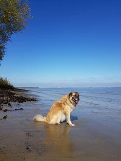 Strand, Dogs, Animals, Vacation, Nice Asses, Animales, Animaux, Doggies, Animal