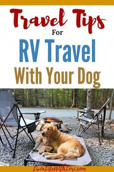Here are some travel tips for what you need to know if you plan to RV Travel With Your Dog. #RVtravel #RVtravelwithdog #travelwithdog #rvliving Camping Diy, Travel Trailer Camping, Dog Travel, Family Camping, Tent Camping, Camping Gear, Outdoor Camping, Travel Tips, Camping Jokes