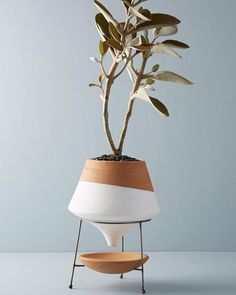 Made with glazed terracotta and metal Dipped Clay Pot + Stand by Anthropologie V. - Garden Style - Made with glazed terracotta and metal Dipped Clay Pot + Sta Indoor Planters, Planter Pots, Large Planters, Clay Planter, Fall Planters, Indoor Herbs, White Planters, Indoor Plant Pots, Indoor Gardening
