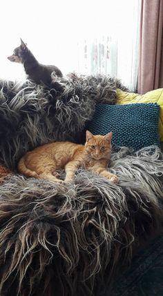 beautifull felted woolen fleece 100% leatherfree The 100, Felt, Cats, Animals, Felting, Gatos, Animales, Animaux, Feltro