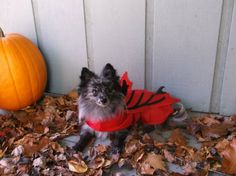 Fall Fido Fun ! #cute #dog in #nature during the #fall season with #pumpkin! #woof!