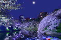 The Four seasons of Japan (日本語↓) 日本の四季 Sakura. Moon. Night. Last year I saw a very beautiful sakura's reflection photo that my friend  took, this year, I am determine to take one...Thanks for inspiration... 桜月夜 昨年、私は友達撮ったとても美しい桜が反射した写真を見ました、今年は、絶対にこれを撮ってみようと心に決めていました・・・インスピレーションをくださって、ありがとうございました・・・ Other photos are available in my page, thank you!! 他の写真は下記の私のページにアップしていますので、よろしくお願いいたします。