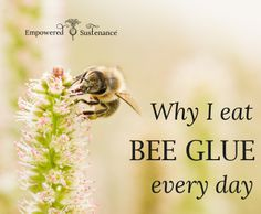 The benefits of including propolis (bee glue) in your diet every day