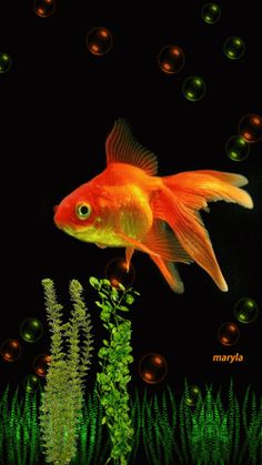 Learn how to make a gif. Create animated gifs online with our free gif animator in just three easy steps. Gif Pictures, Images Gif, Pretty Pictures, Animiertes Gif, Animated Gif, Colorful Fish, Tropical Fish, Fish Gif, Fish Wallpaper