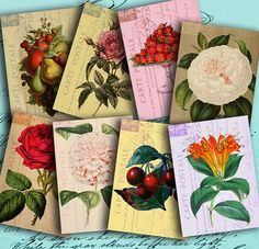 Fruits and Flowers on Vintage Postcards  ATC by DigitalPerfection, $4.00
