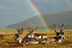 rennes rainbow chill