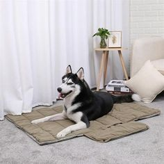 New cheap pet gift uploaded at SketchGrowl: Soft Dog Bed Mat Cheap Dog Beds, Gifts For Pet Lovers, Pet Gifts, Dog Lovers, Cheap Pet Supplies, Pet Trailer, Puppy Beds, Cat Mat