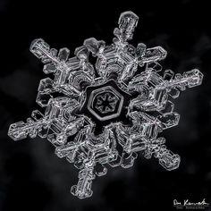 Snowflake by Don Komarechka