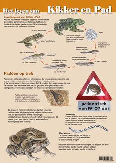 Educatieve kaart het leven van Kikker en Pad (achterzijde), http://iturl.nl/snRlc