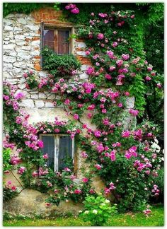 climbing roses house