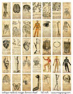 Antique Medical Engraving Domino Digital Collage Sheet for jewelry decoupage altered art inch 25 altered book necklaces Domino Art, Altered Books, Altered Art, Altered Tins, Altered Images, Domino Crafts, Domino Jewelry, Halloween Miniatures, Handmade Crafts