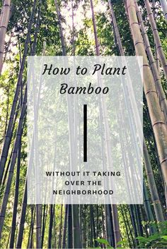 Bamboo Has Bad Reputation For Spreading Far And Wide Making It Difficult To Keep In