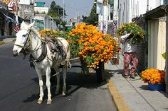A burro is loaded down with marigolds for the Dia de los Muertos celebration in a village in Mexico. Marigolds are an important element in honoring the dead.